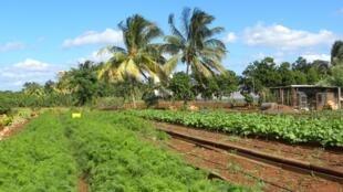 La finca Vista Hermosa ha sido la primera categorizada por Slow food por sus buenas prácticas agrícolas.
