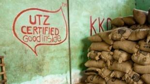 UTZ est le label de cacao durable qui domine le marché. En huit ans, la certification néerlandaise a soutenu 170 000 planteurs, rien qu'en Côte d'Ivoire.