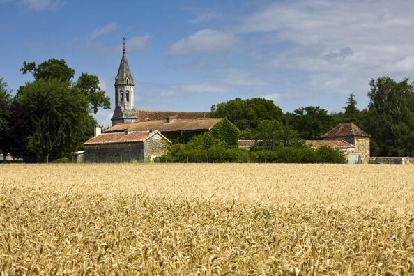 Un champ de blé dans la vallée de la Loire en France.