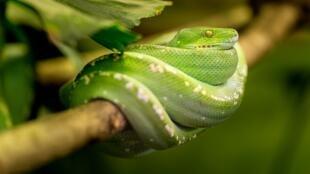 Chaque année, 1 million de personnes sont mordues par des serpents.