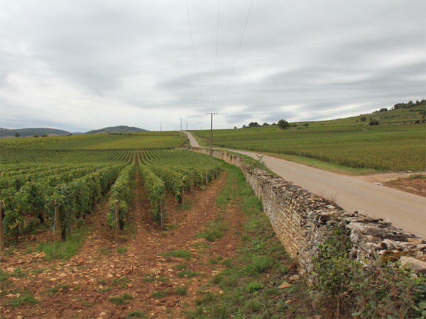 Before the storm - a Burgundy vineyard