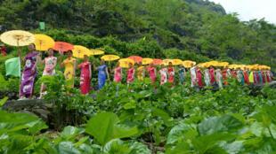 图为中国广西壮族自治区莱宾种植园旗袍妇女旅游表演