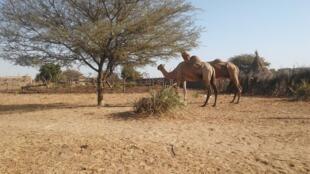 Village_sur_la_route_d'AM-TIMAN-Tchad salamat