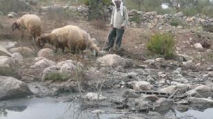 Berger palestinien, en Cisjordanie. De nombreuses sources d'eau sont polluées par le rejet des eaux usées.