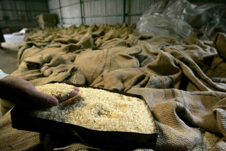 En Guinée, depuis une dizaine d'années, un opérateur économique met en valeur les terres fertiles de la région en produisant du riz sur des centaines d'hectares. (Photo d'illustration)