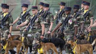 Le 132e Bataillon Unité canine de l'armée française marche sur l'avenue des Champs-Elysées à Paris lors de la parade militaire, le 14 Juillet  2016.