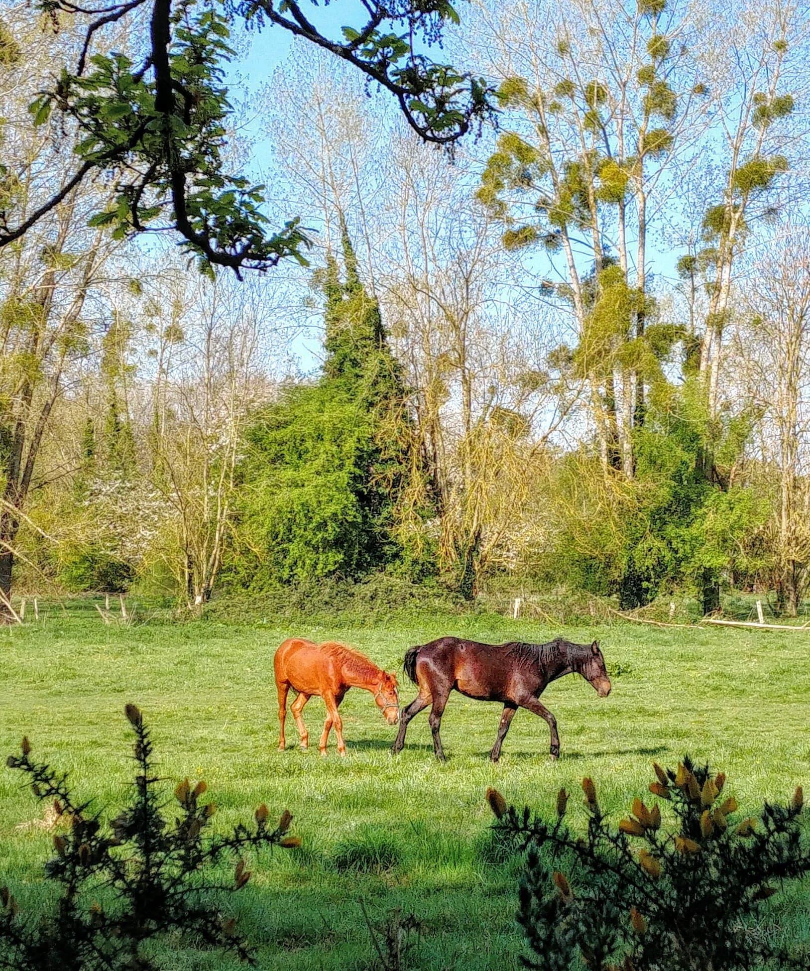 Những nông trại ở vùng đồng quê Normandie yên tĩnh