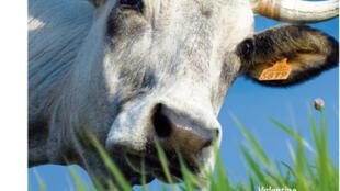 2012年的农业沙龙海报上是一头名叫Valentine的7岁小母牛。
