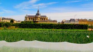A horta do rei foi feita entre 1678 e 1683 por Jean-Baptiste La Quintinie, a pedido do rei Louis XIV. Aberta ao público, é lá que fica a Escola Nacional Superior de paisagismoe.