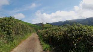 Des paysages de bocage propices à l'élevage bovin pour le lait.