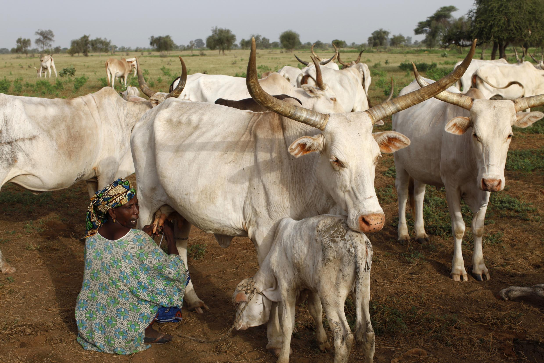 Au Nigeria, des agriculteurs bachamas s'en seraient pris à des villages d'éleveurs peuls.