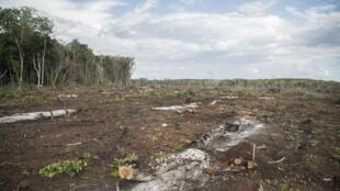 Deforestation-in-Hopelchén-2-1
