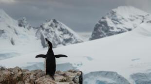 Chim cánh cụt, loài vật cần được bảo vệ ở Nam Cực. Ảnh của Greepeace chụp tại Nam Cực ngày 25/01/2018.