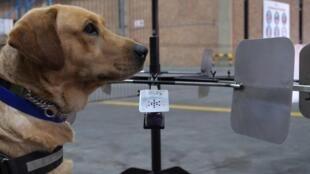 MacGyver, chien de la brigade canine K9 Law Enforcement, à Johannesburg, Afrique du Sud, le 23 avril 2021.