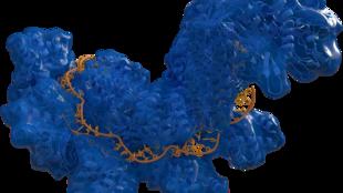 CRISPR y fragmentos de ADN de E.Coli.