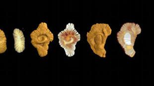 Найденные в Габоне доисторические организмы датируются 2 млрд лет.