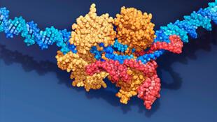 Sơ đồ gien CRISPR-Cas9, một loại enzyme chuyên dùng vào việc cắt ADN, một khám phá của nhà khoa học Pháp Emmanuelle Charpentier.