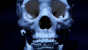 Un crâne humain.