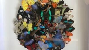 Montagem de insetos em exposição na Deyrolle, em Paris; loja-museu criada em 1831 desperta para sua vocação ecológica