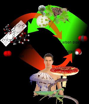 Quá trình quang hợp (ảnh Wikipedia)