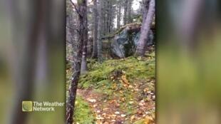 """El efecto visual de respiración se debe a que """"el viento trata de 'tumbar' los árboles, y mientras su fuerza se transfiere a las raíces, el suelo empieza a 'jadear'""""."""