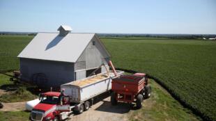 Một cơ sở trồng đậu nành ở tiểu bang Illinois, Mỹ. Ảnh chụp ngày 6/7/2018.