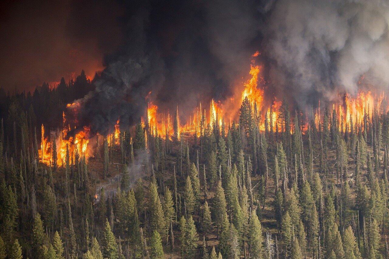Los incendios no necesariamente son catástrofes ecológicas. En muchos hábitats, son necesarios para la renovación de su flora.