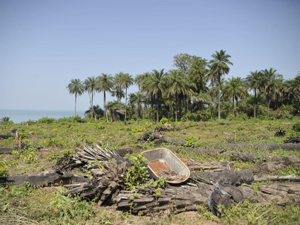 Exemple de déforestation en Guinée-Bissau, à Bijagos.