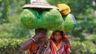 Darjeeling est une des seules origines de produits étrangers à disposer d'une appellation en Europe. Ce thé peut se vendre jusqu'à 200 dollars le kilo.