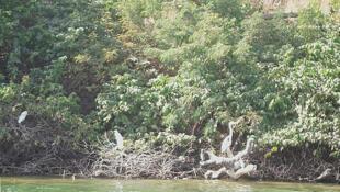 La mangrove du Sénégal