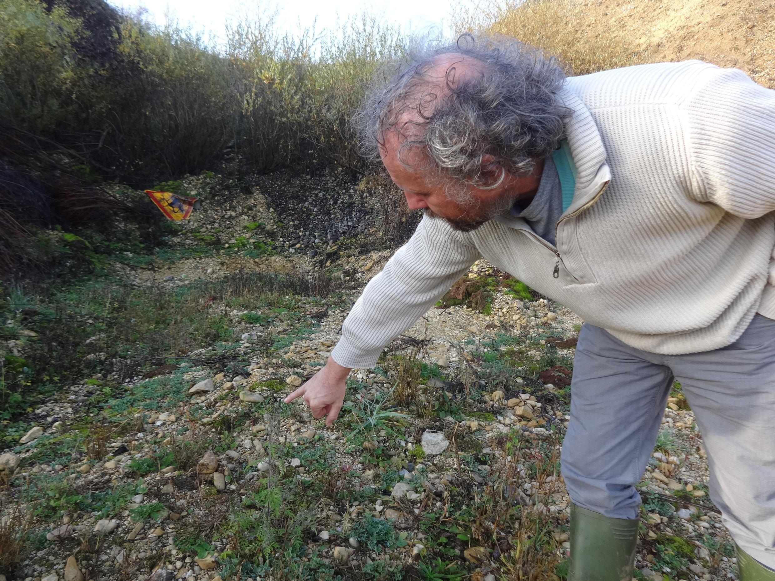 Botanist Bruno Chauvel points out a ragweed plant in a gravel quarry north of Dijon, 12 November 2015