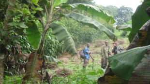 Sur la trace des chimpanzés au Parc National de Kibale