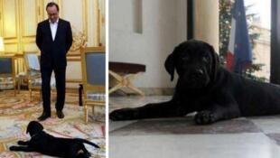 Philae, a labradora que o presidente francês François Hollande ganhou de presente neste Natal.