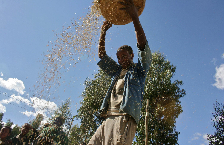 Dans toute l'Afrique australe, la production du maïs blanc a pâti de la sécheresse, et en Zambie les agriculteurs n'ont pas reçu les engrais à temps. Le déficit de production est alarmant, parce c'est la base de l'alimentation dans la région.