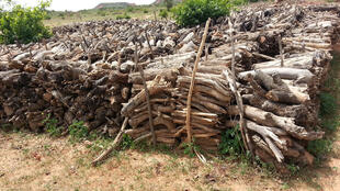 Un marché de bois dans la commune rurale de Makalondi. Non seulement on a tout coupé, mais on continue de couper.
