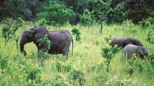En Afrique australe, « les animaux sauvages représentent le problème numéro un pour les populations rurales » tandis que la faune sauvage est en danger.