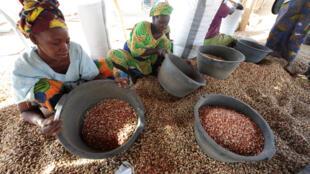 L'arachide est le principal produit cultivé au Sénégal par au moins 60% de la population et il est principalement utilisé dans les aliments.