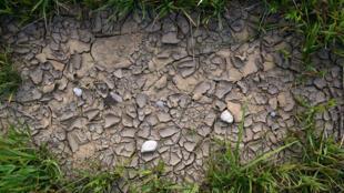 Sequía en el planeta