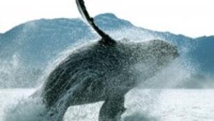 Si le chant des baleines s'éteignait ....