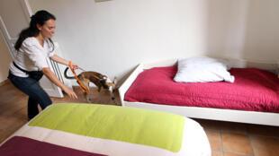 Recherche de punaises de lit avec un chien dressé.