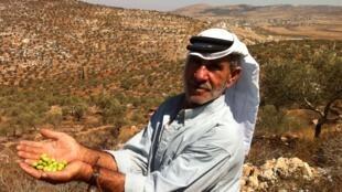 Les fermiers palestiniens viennent de retrouver leurs terres après 10 ans d'interdiction d'accès.