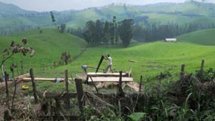 Lushebere, à 80 kilomètres à l'ouest de Goma.
