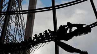 نمایش اسکلت یک دایناسور در ایفل