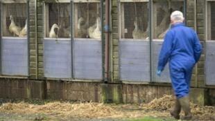 Первый в мире случай инфицирования человека вирусом птичьего гриппа H5N8 выявили в России