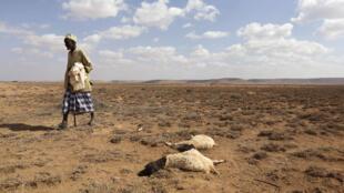 Mais de um milhão de pessoas à fome devido à seca no centro e sul de Angola, onde milhares de cabeças de gado j160 morreram de sede e fome.