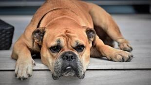 Je suis fatigué, tellement fatigué !