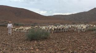 170000 bêtes sont attendues du Niger, du Nigeria et du Burkina Faso (photo d'illustration).