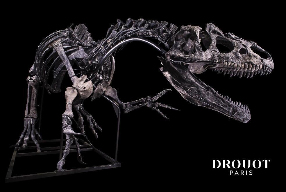 Allosaurus skeleton for sale 13 Oct 2020_Drouot auction house Paris