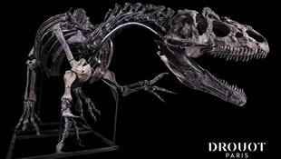 Allosaurus skeleton for sale 13 Oct 2020_Drouot auction house Paris