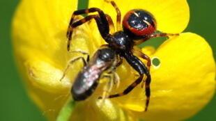 Exposição sobre as aranhas fica em cartaz em Paris até julho de 2012